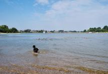 Zufrieden stopft Madame durch das Wasser