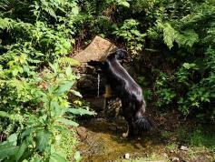 Doxi entdeckt eine Wasserquelle im Wupperhang