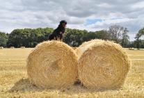 Die ersten Kornfelder sind bereits abgeernetet