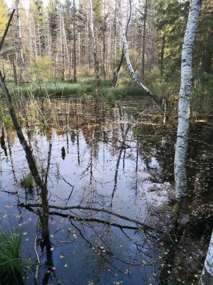 Moorige Tümpel durchziehen das Ried