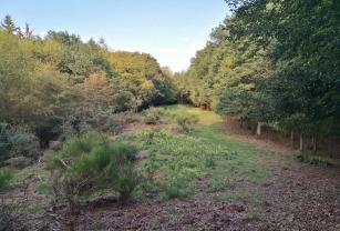 Tief im Wald versteckt: Eine Schneise für die Jäger