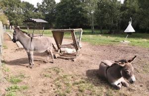 Drei der sechs Esel, die Frank Noppert auf seinem Hof hält