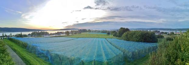 Panoramablick vom Hochwart