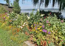 Blumen am Uferweg in Niederzell
