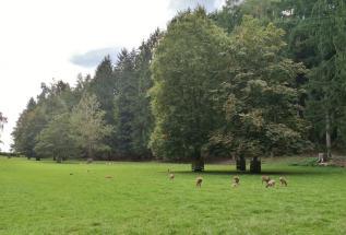 Wildgehege im Wald hinter Albertshofen