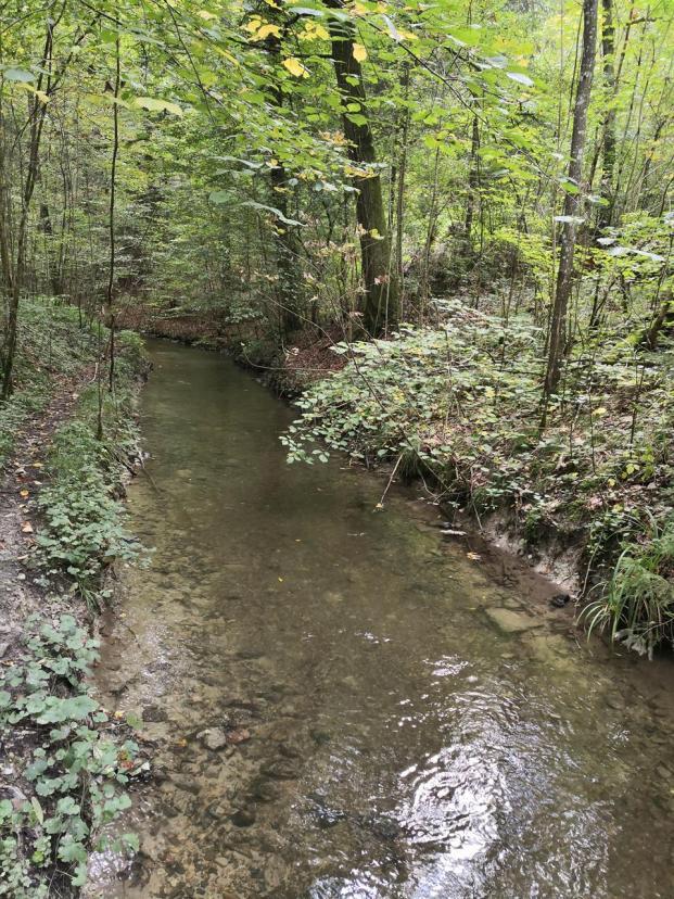 Der Mittelalterlische Kanal Weingarten im Wald