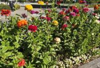 Blumen auf einer Vekehrsinsel