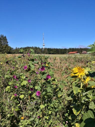 Blick zum Funkturm auf der Fürstenhöhe