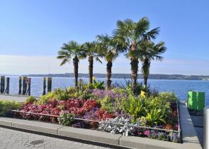 Palmen an der Seepromenade