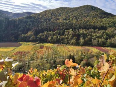 Bei Dernau wächst der Wein sogar in den Tallagen an der Ahr