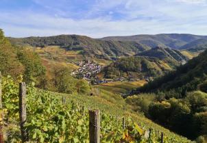 Blick vom Rotweinwanderweg Richtung Mayschoß