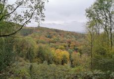 Blick ins Siebengebirge beim Aufstieg zum Löwenhof