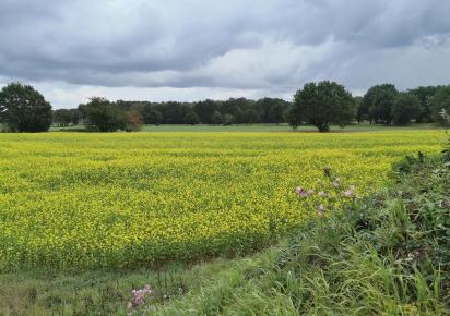 Landschaft am Wesel-Datten-Kanal