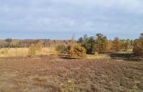 Nördlicher Teil der Heidefläche