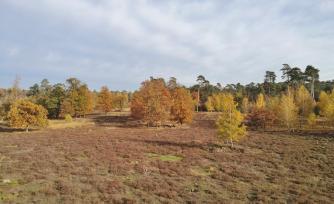 Östlicher Teil der Heidefläche