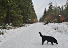 Noch keine Spuren im gefrorenen Weiß: Auf diesem Weg sind wir die Ersten.