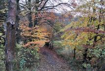 Herbstfarben an der Rur