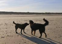Am Strand treffen sich die Hunde