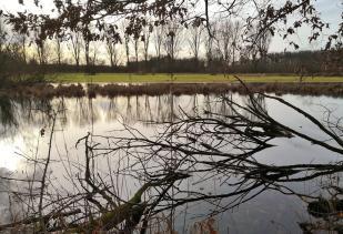 Umgestürzte Bäume spiegeln sich mit ihren Ästen im Wasser