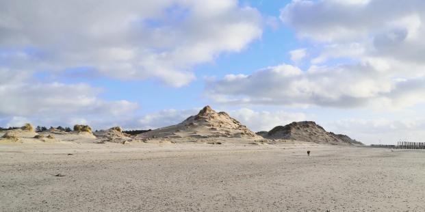 Bizarre Dünenformationen zwischen Strand und Waldgürtel