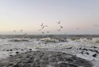 Möwen stehen im Wind und lauern auf Krebse, die an den Steinen bei Flut nach oben kommen