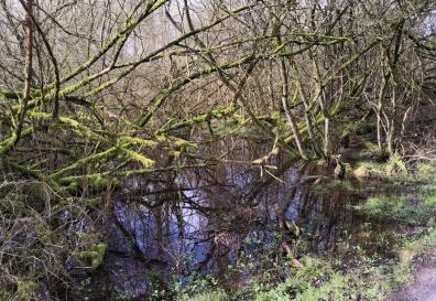 Feuchtgebiet am Rande des Unterbacher Sees