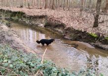 Doxi testet die Wasserqualität des Unterbachs