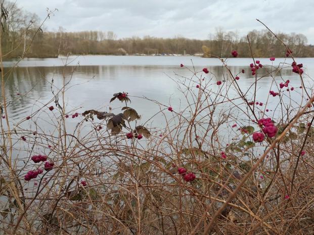 Hüsche Rote Beeren am Seeufer - und das mitten im Winter