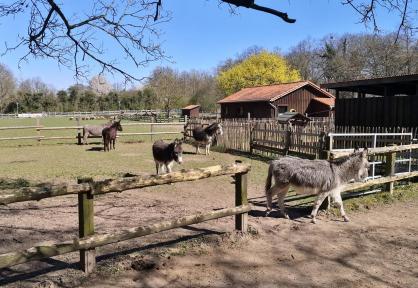 Hübsche Eselchen im Kinderbauernhof Selikum