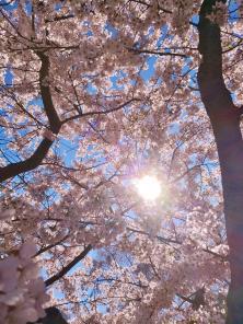 Die hochstehende Mittagssonne wirft ihre Strahlen durch das Blütendach