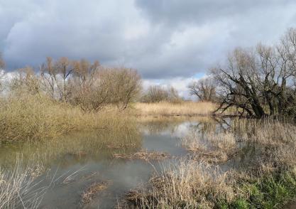 Der Rhein hat sich in den Überflutungsflächen im Neusser Süden breit gemacht