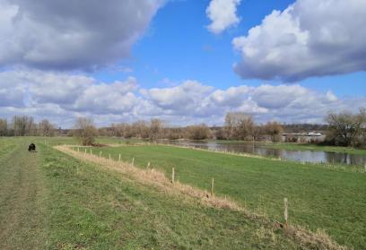 Auf dem Rheindeich am Ortsrand von Uedesheim