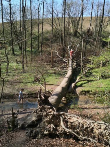 Ein umgestürzter Baumstaumm lädt zum überqueren des Stinderbaches ein