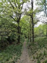 Abstieg entlang der alten Landwehr von Altena