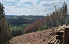 Abgeholzte und abgestorbene Fichtenhaine im Balver Wald