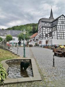 Doxi in einem kleinen Tretbecken mit Ahrwasser vor dem Marktplatz von Blankenheim