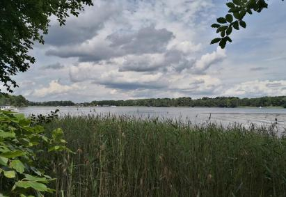 Blick durch den Schilfgürtel auf das gegenüberliegende Ufer