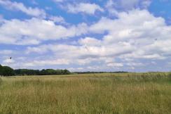 Feldflächen hinter dem Müritzufer