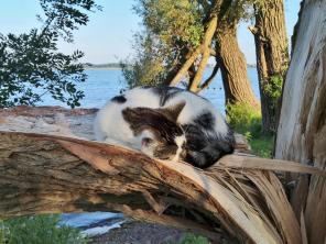 Das süße Kützchen döst auf einem Baumstamm ganz entspannt im Schatten