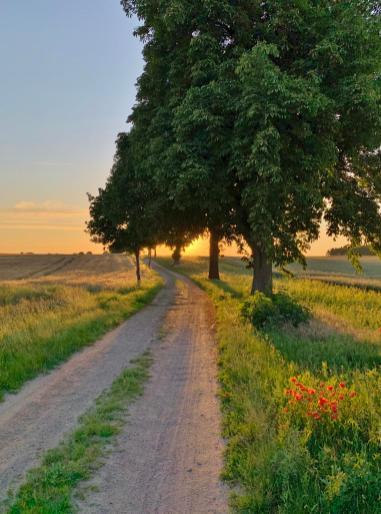 Malerisch im Sonnenuntergang: Unser Weg zurück von Ludorf in Richtung Röbel