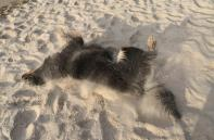 Doxi paniert sich selbst mit Ostseesand