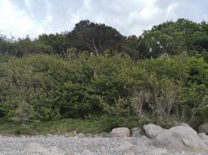 Blick hinauf vom Strand zur bewachsenen Steilküste