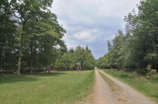 Breite Waldwege im Forst Schmidtheim