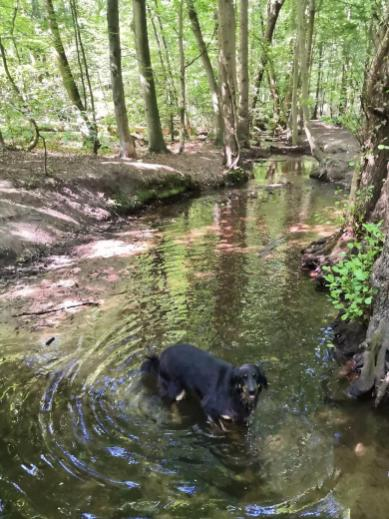 Doxi testet die Wasserqualität im Tannenbuschgraben