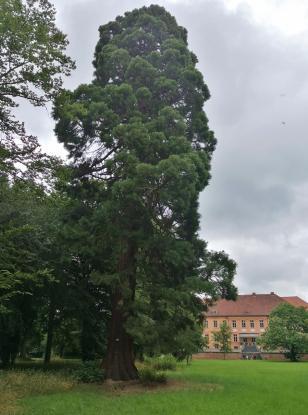 Schloss Rühstädt, Gartenseite mit Mammutbaum