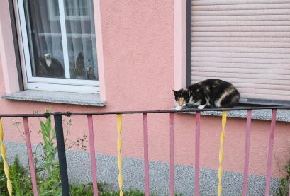 Süßes Kätzchen belauert Doxi