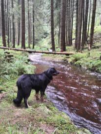 Wir folgen dem Lauf der Weißen Göltzsch durch den Wald