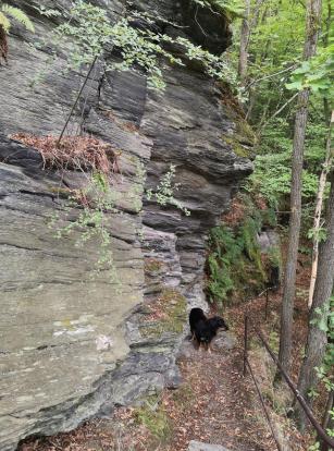 In den Felsen oberhalb des Gölzschtals ist Trittischerheit gefordert