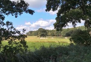 Typische Niederrhein-Landschaft