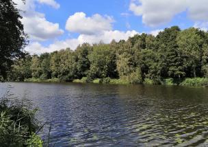 Der Westteil des Borner Sees